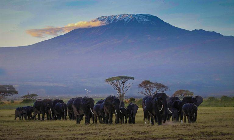 Climbing-Kilimanjaro-African-adventure-Gay-Hiking-Popular